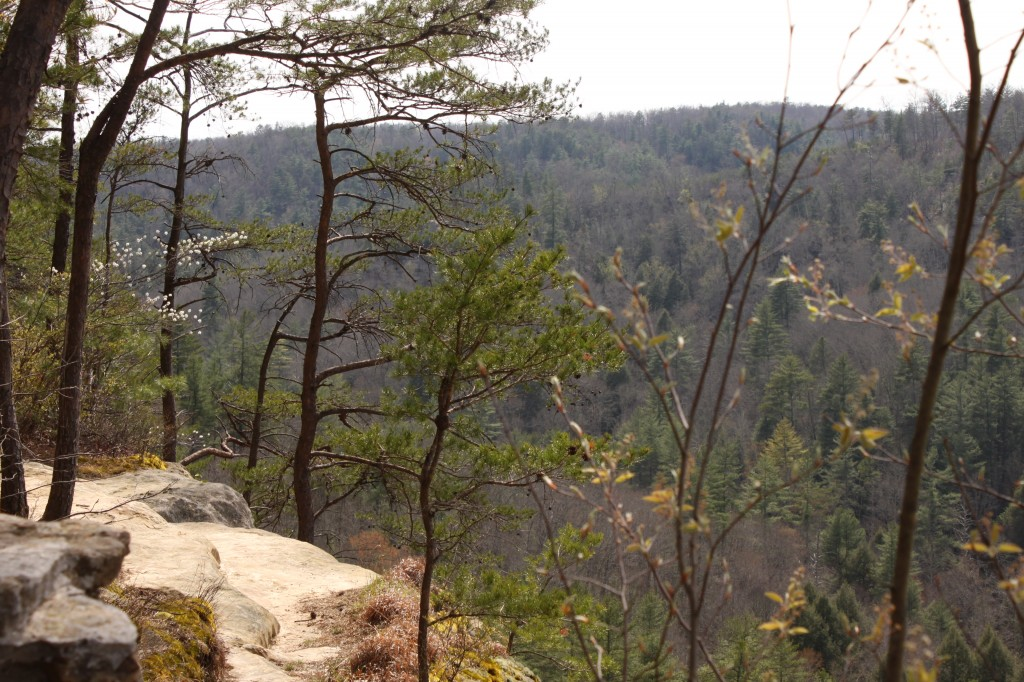 Devil's Overlook in Daniel Boone National Forest