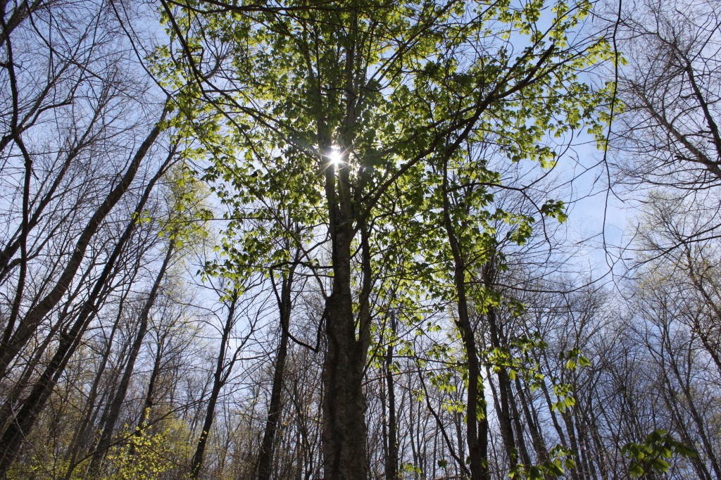 Birch Hollow 2 075